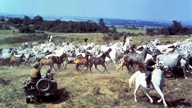 ТОП-10 художественных кинофильмов о лошадях - фото miracle-white-s, Фильмы про лошадей , конный журнал EquiLIfe