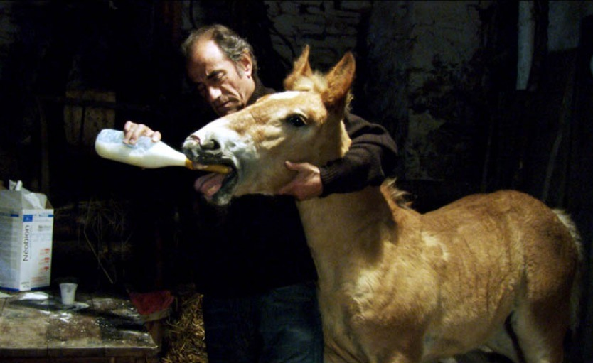 ТОП-10 художественных кинофильмов о лошадях - фото pom-le-poulain-2006-01-g, Фильмы про лошадей , конный журнал EquiLIfe