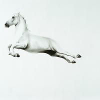 Майкл Заврос (Michael Zavros) - фото 1-200x200, главная Разное Фото , конный журнал EquiLIfe