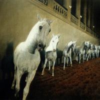Майкл Заврос (Michael Zavros) - фото 3-200x200, главная Разное Фото , конный журнал EquiLIfe