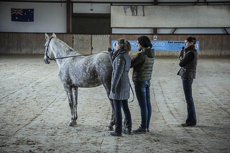 Семинар Saskia Gunzer или полезные советы по работе на вожжах  - фото 10389658_1015875971798313_2160784811400226987_n, главная Разное Тренинг , конный журнал EquiLIfe
