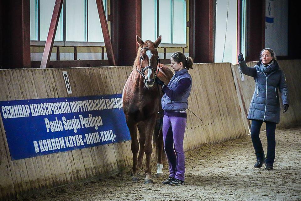 Семинар Saskia Gunzer или полезные советы по работе на вожжах  - фото 11012783_1015875768465000_1598439195431100167_n, главная Разное Тренинг , конный журнал EquiLIfe