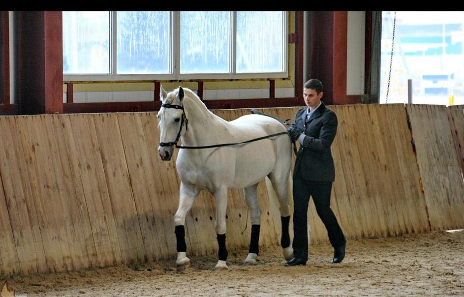 Семинар Saskia Gunzer или полезные советы по работе на вожжах  - фото 12, главная Разное Тренинг , конный журнал EquiLIfe