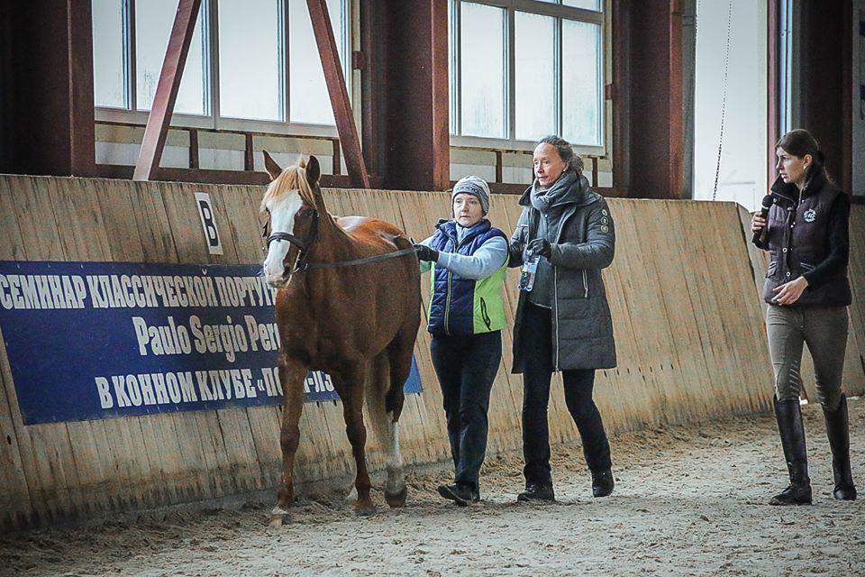 Семинар Saskia Gunzer или полезные советы по работе на вожжах  - фото 12193705_1015875385131705_2334249507080312510_n, главная Разное Тренинг , конный журнал EquiLIfe
