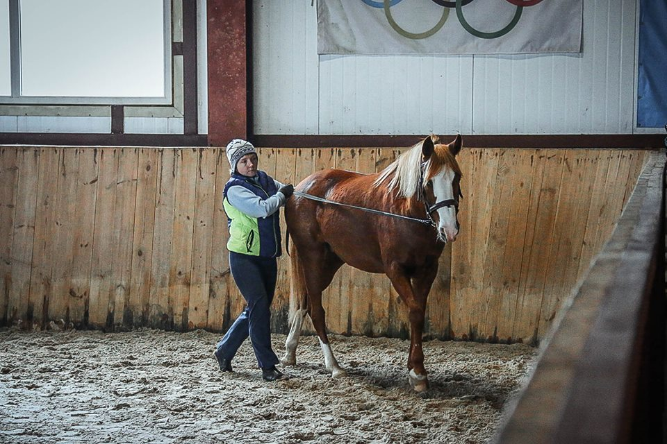 Семинар Saskia Gunzer или полезные советы по работе на вожжах  - фото 12196083_1015875445131699_672783103892206611_n, главная Разное Тренинг , конный журнал EquiLIfe