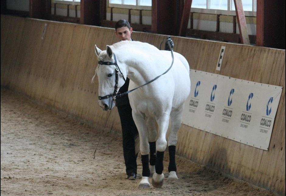 Семинар Saskia Gunzer или полезные советы по работе на вожжах  - фото 14, главная Разное Тренинг , конный журнал EquiLIfe