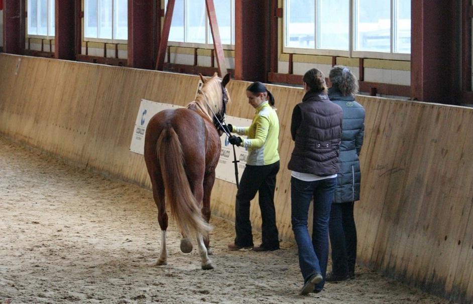 Семинар Saskia Gunzer или полезные советы по работе на вожжах  - фото 16, главная Разное Тренинг , конный журнал EquiLIfe