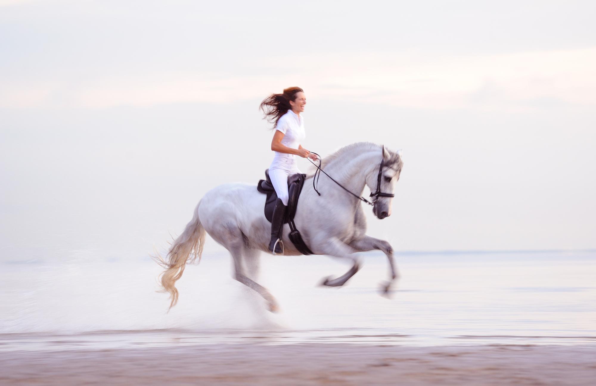 Зачем заводить собаку (или лошадь)?  - фото 2000-e88c9e91752e0be0febe8905f9d63f54, главная Разное Содержание лошади Тренинг , конный журнал EquiLIfe