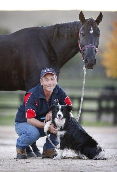 Зачем заводить собаку (или лошадь)?  - фото 2315039347, главная Разное Содержание лошади Тренинг , конный журнал EquiLIfe