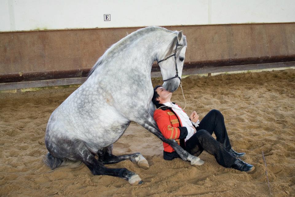 Хосе Винтем - фото 422448_2868718517389_9844190_n, главная Конные истории Разное , конный журнал EquiLIfe