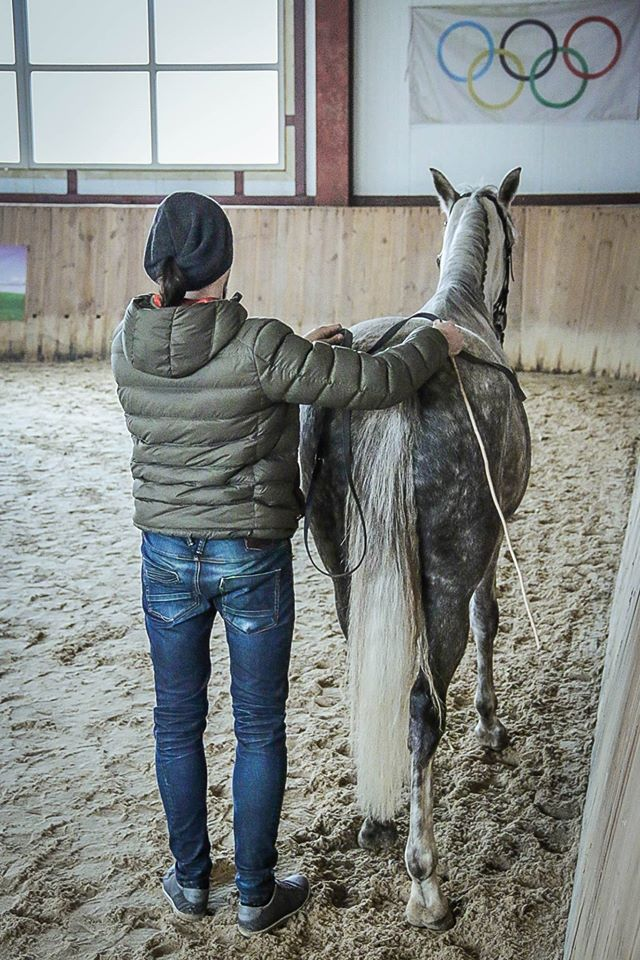 Семинар Saskia Gunzer или полезные советы по работе на вожжах  - фото 905567_1015875905131653_283889519323291664_o, главная Разное Тренинг , конный журнал EquiLIfe