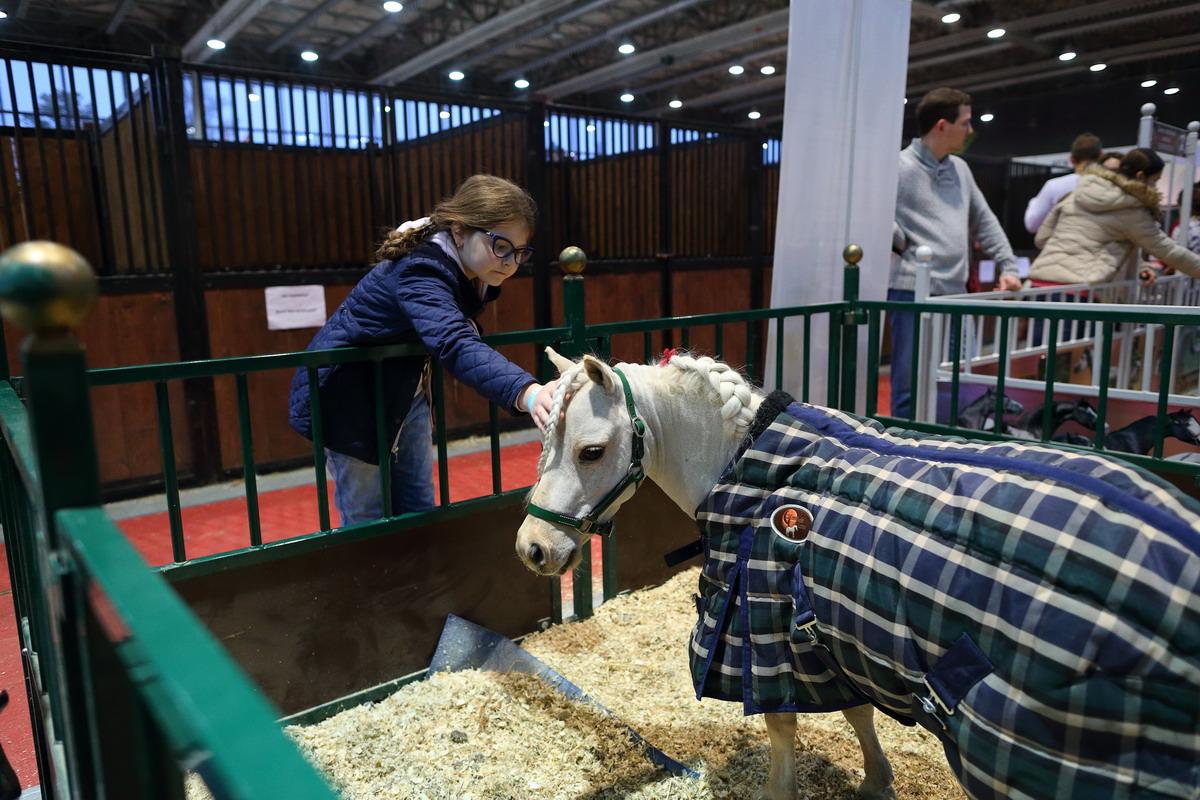 Самое интересное в программе  Эквирос – 2016 - фото BK0R6999_resize, Новости , конный журнал EquiLIfe