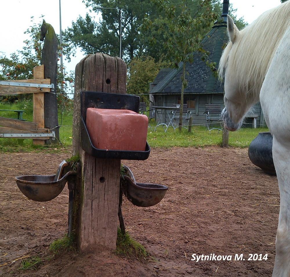 """Создание """"Рая в леваде"""": теория и практика Ч.1 - фото IMG_20140806_163423, главная Джеми Джексон Здоровье лошади Конюшня Копыта Содержание лошади , конный журнал EquiLIfe"""