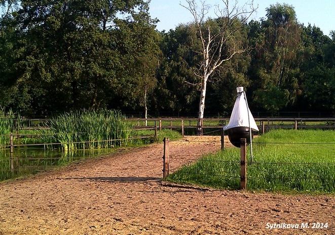 """Создание """"Рая в леваде"""": теория и практика Ч.1 - фото IMG_4973, главная Джеми Джексон Здоровье лошади Конюшня Копыта Содержание лошади , конный журнал EquiLIfe"""