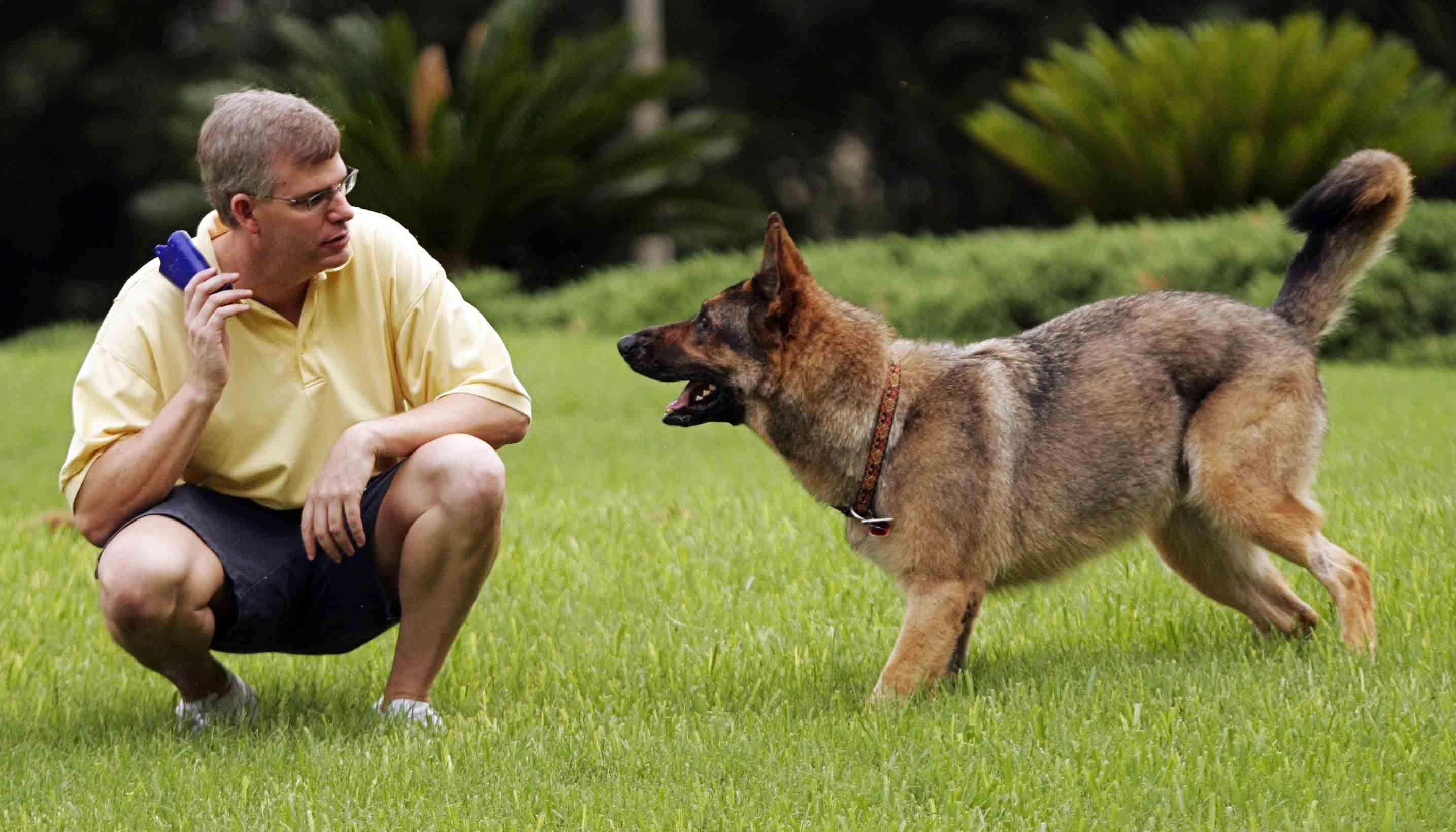 Зачем заводить собаку (или лошадь)?  - фото JeffSeigo, главная Разное Содержание лошади Тренинг , конный журнал EquiLIfe