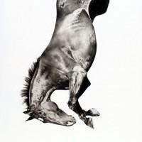 Майкл Заврос (Michael Zavros) - фото Michael-Zavros_Spring-Fall-11-200x200, главная Разное Фото , конный журнал EquiLIfe
