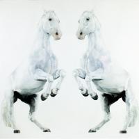 Майкл Заврос (Michael Zavros) - фото Michael_Zavros_Double_Levade-200x200, главная Разное Фото , конный журнал EquiLIfe