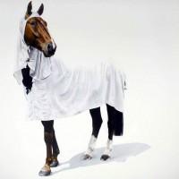 Майкл Заврос (Michael Zavros) - фото michael-zavros-paintings-5-200x200, главная Разное Фото , конный журнал EquiLIfe