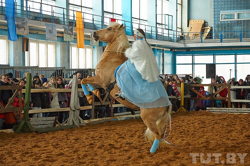 Конная выставка в Минске «Осень с horseshow — 2015»! - фото normal_041-942350, Новости , конный журнал EquiLIfe