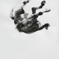 Майкл Заврос (Michael Zavros) - фото tumblr_mg0ecc9fyG1qbmgeto1_1280-200x200, главная Разное Фото , конный журнал EquiLIfe