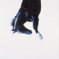 Майкл Заврос (Michael Zavros) - фото tumblr_mg0ecc9fyG1qbmgeto3_1280-200x200, главная Разное Фото , конный журнал EquiLIfe