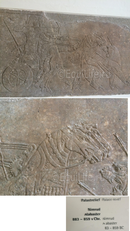 Страничка редактора. Кони музея Пергамон. - фото -4_wm_wm, главная Конные истории Разное , конный журнал EquiLIfe