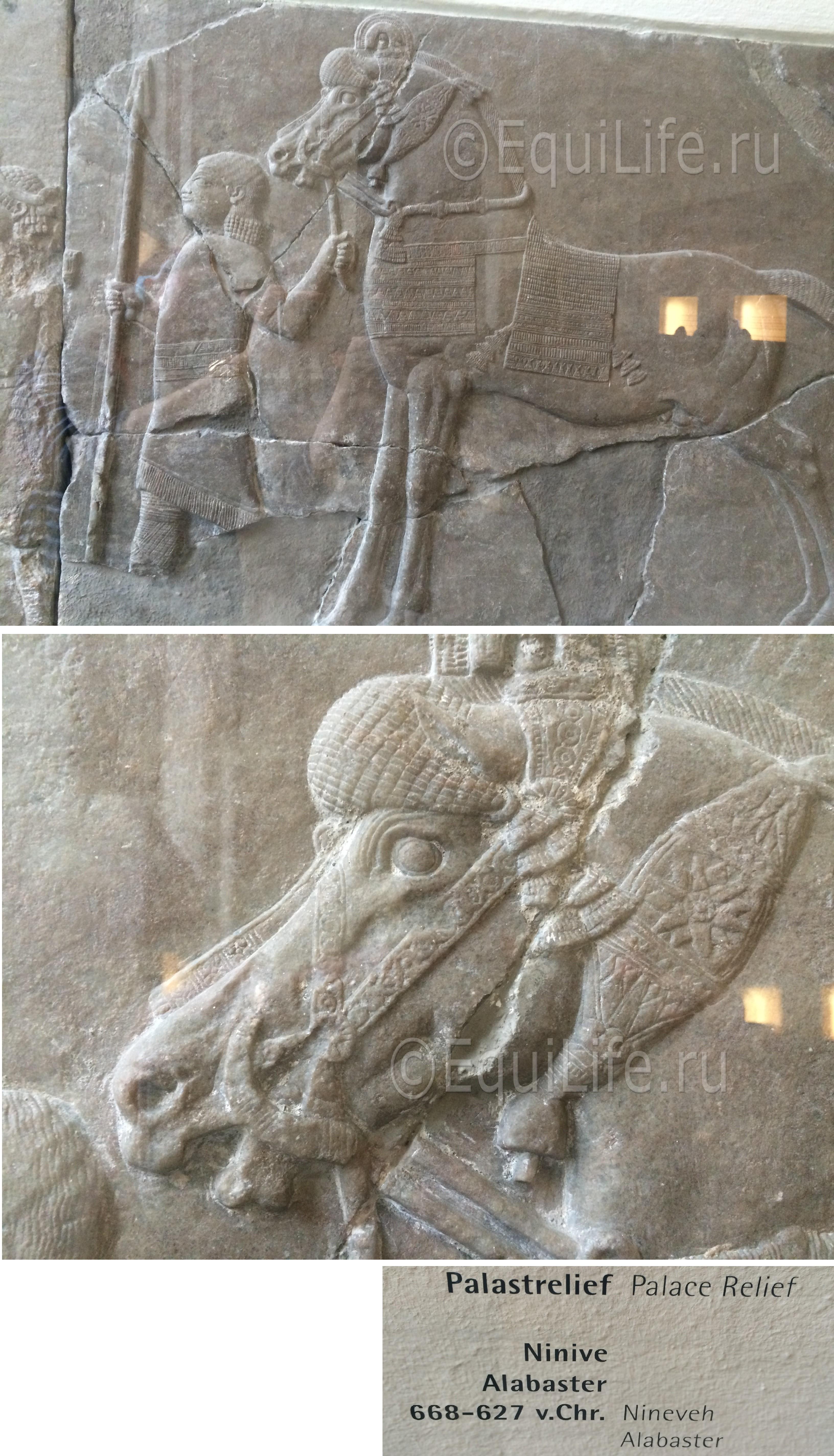 Страничка редактора. Кони музея Пергамон. - фото -5_wm_wm, главная Конные истории Разное , конный журнал EquiLIfe