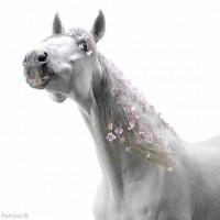 Цветы и лошади - потрясающая серия фотографий Светланы Петровой - фото 108182210_petro1-200x200, главная Разное Фото , конный журнал EquiLIfe