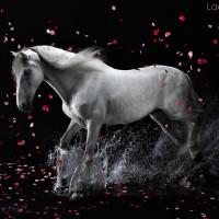 Цветы и лошади - потрясающая серия фотографий Светланы Петровой - фото 108182221_petro19-200x200, главная Разное Фото , конный журнал EquiLIfe
