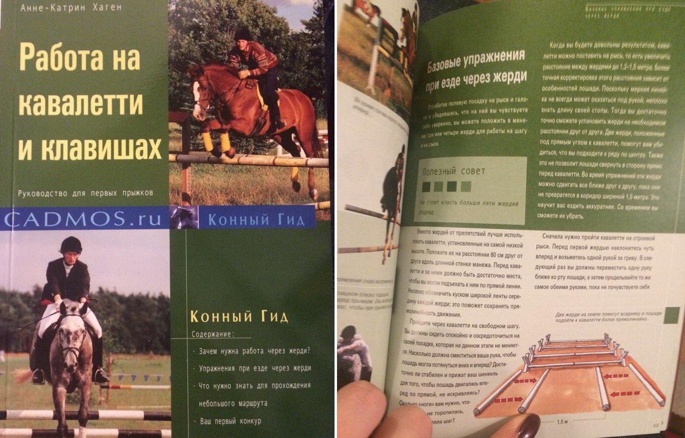 Рождественский конкурс от EquiLife.ru - фото Vi6cv1bLoMk, главная Разное , конный журнал EquiLIfe