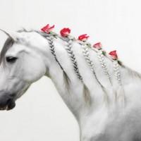 Цветы и лошади - потрясающая серия фотографий Светланы Петровой - фото svetlana-petrova-02-200x200, главная Разное Фото , конный журнал EquiLIfe