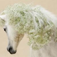 Цветы и лошади - потрясающая серия фотографий Светланы Петровой - фото svetlana-petrova-04-200x200, главная Разное Фото , конный журнал EquiLIfe