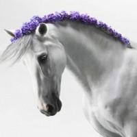 Цветы и лошади - потрясающая серия фотографий Светланы Петровой - фото svetlana-petrova-05-200x200, главная Разное Фото , конный журнал EquiLIfe