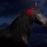 Цветы и лошади - потрясающая серия фотографий Светланы Петровой - фото svetlana-petrova-07-200x200, главная Разное Фото , конный журнал EquiLIfe