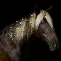 Цветы и лошади - потрясающая серия фотографий Светланы Петровой - фото svetlana-petrova-10-200x200, главная Разное Фото , конный журнал EquiLIfe