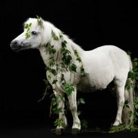 Цветы и лошади - потрясающая серия фотографий Светланы Петровой - фото svetlana-petrova-12-200x200, главная Разное Фото , конный журнал EquiLIfe