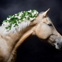 Цветы и лошади - потрясающая серия фотографий Светланы Петровой - фото svetlana-petrova-14-200x200, главная Разное Фото , конный журнал EquiLIfe