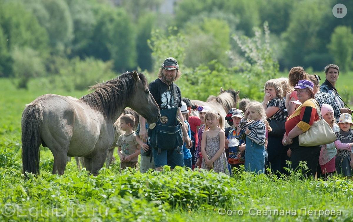 Коник польский. Полудикие табуны лошадей - фото 14_wm_wm, главная Пастбище Поведение лошади Содержание лошади , конный журнал EquiLIfe