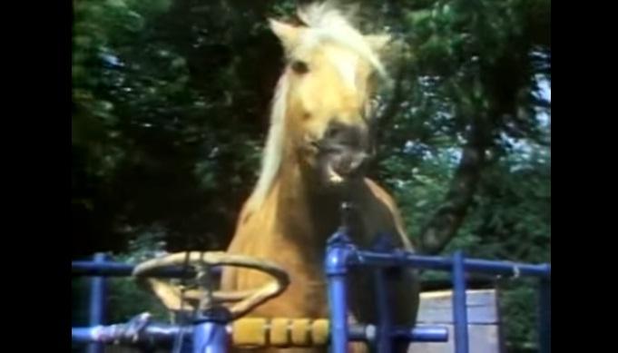 Конь, который умеет водить автомобиль! - фото 2, главная Конные истории Разное , конный журнал EquiLIfe