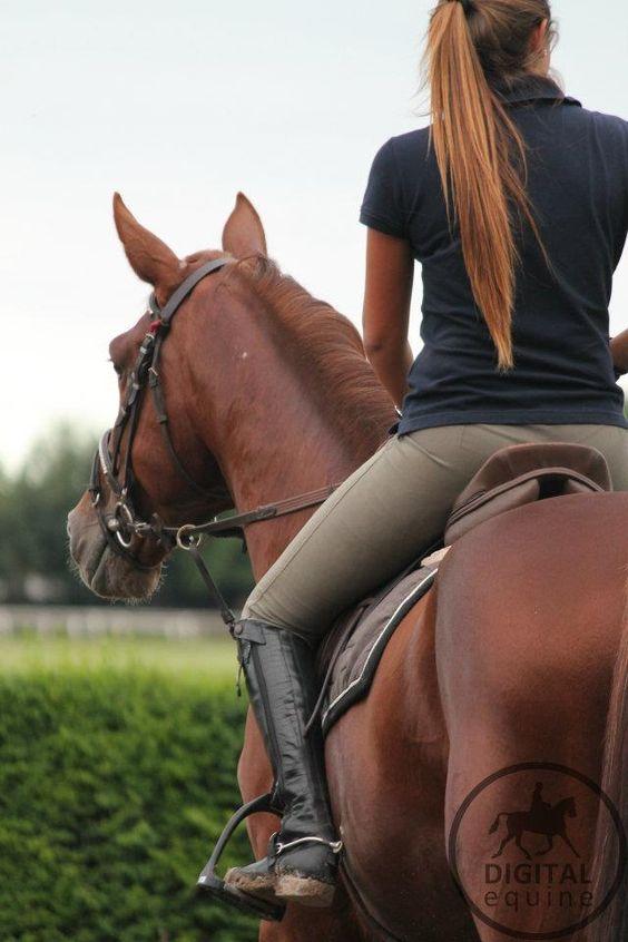 Страх ездить верхом. Кто виноват и что делать? - фото ff0345c3c15aa0aa6e73642e60b1502d, главная Разное Тренинг , конный журнал EquiLIfe