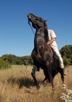 Страх ездить верхом. Кто виноват и что делать? - фото horsecity_com, главная Разное Тренинг , конный журнал EquiLIfe