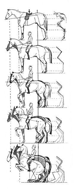 Основные термины, используемые для характеристики движений лошади в выездке - фото 0a26774fcaab0657d16e228250a23bc2, главная Разное Тренинг , конный журнал EquiLIfe
