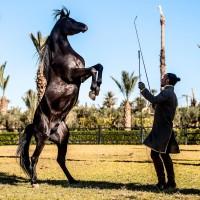 Садек Эль Баджауи - фото 10494890_762110897142615_3871146410077584118_o-200x200, главная Разное Фото , конный журнал EquiLIfe