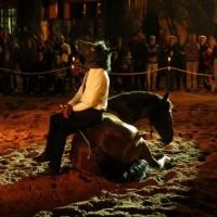 Садек Эль Баджауи - фото 10888758_866683986685305_1054922422546562030_n-200x200, главная Разное Фото , конный журнал EquiLIfe