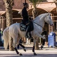Садек Эль Баджауи - фото 10952106_875406099146427_6271124645932484266_n-200x200, главная Разное Фото , конный журнал EquiLIfe