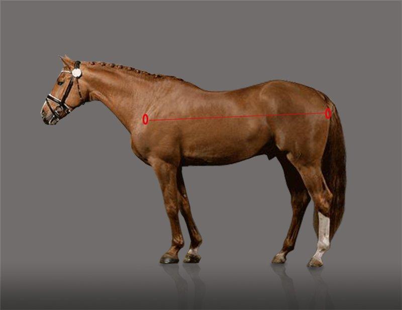 Есть ли шансы у российского спортивного коневодства? Или все об экстерьере лошади. - фото 12, главная Разное Тренинг , конный журнал EquiLIfe