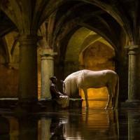 Садек Эль Баджауи - фото 12047175_1010547678965601_4111256006656001422_n-200x200, главная Разное Фото , конный журнал EquiLIfe