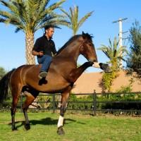 Садек Эль Баджауи - фото 1484729_722619381091767_1708264843_n-200x200, главная Разное Фото , конный журнал EquiLIfe