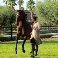 Садек Эль Баджауи - фото 1510768_684904408196598_93121344_n-200x200, главная Разное Фото , конный журнал EquiLIfe