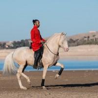Садек Эль Баджауи - фото 1799056_703890099631362_689826623_o-200x200, главная Разное Фото , конный журнал EquiLIfe